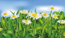 Nature. Spring green grass and chomomile. 3d vector realistic landscape. Realistic chomomile in blue background. Nature. Spring green grass and chomomile. 3d vector illustration