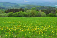 Landscape nature spring Royalty Free Stock Photo