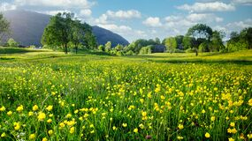 Nature Spring Landscape With A Field Of Wild Yellow Buttercups, Green Trees And White Clouds In Blue Sky Stock Photo