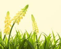 Nature spring or summer background Royalty Free Stock Image