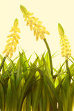 Nature spring or summer background Stock Photography
