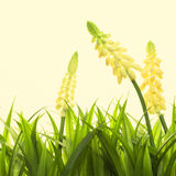 Nature spring or summer background Stock Photos