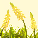 Nature spring or summer background Royalty Free Stock Photography