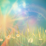 Nature spring or summer Vintage style background. Royalty Free Stock Images