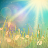 Nature spring or summer Vintage style background. Stock Photo