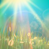 Nature spring or summer Vintage style background. Stock Photography