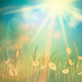 Nature spring or summer Vintage style background. Stock Images