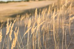 Nature. steppe. sand. conservation area royalty free stock image