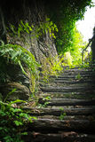 Nature Steps. Stairs with vegitation and rocks in a nature surroundings stock image