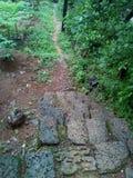 Nature steps stone narrow root stock image