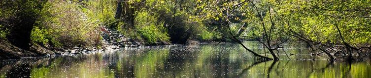 Nature stream Royalty Free Stock Image