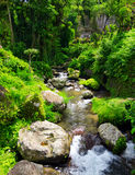 Stream in the tropical forest Stock Image