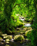 Stream in the tropical forest Royalty Free Stock Photography