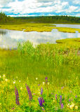 Nature suédoise d'été Photo stock