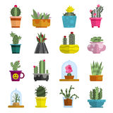 Nature succulent home cactus tropical plant vector illustration. Stock Images