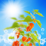 Nature summer background Royalty Free Stock Image