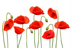 Nature summer background with red poppies. Vector Stock Photos