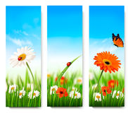 Nature summer banners with colorful flowers. And butterfly. Vector Royalty Free Stock Photography