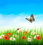 Nature summer colorful flowers with butterfly. Vector illustration Stock Photo