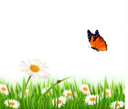 Nature summer daisy flowers with butterfly. Vector illustration Royalty Free Stock Photos