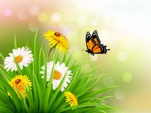 Nature summer daisy flowers with butterfly. Vector illustration Royalty Free Stock Photo