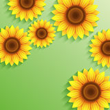 Nature summer green background with 3d sunflower. Beautiful nature green background with 3d sunflowers with place for text. Floral bright modern backdrop with Stock Images