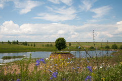 Nature summer in Russian, beautiful tree Royalty Free Stock Photography
