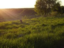 Nature, summer, sunset,спокойствие ,лес ,солнце stock photos