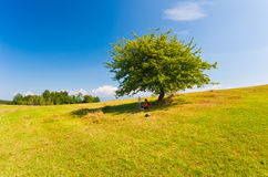Nature summer tree, mother and child Royalty Free Stock Image