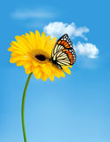Nature summer yellow flower with butterfly. Stock Photo