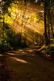 Nature Sunlight exposure Road Forest RoadCentral Royalty Free Stock Images