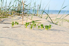 Nature. Sunny summer day sea beach Stock Images