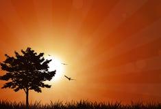 Nature Sunrise. Fresh nature summer sunrise with flying birds outdoors Stock Photos