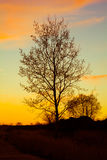 Nature at sunset. The nature at sunset. landscape.trees in the sunlight.the bright colors of the sunset Stock Photography