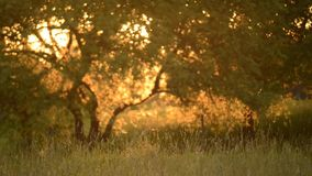 nature sunset light and bokeh stock footage
