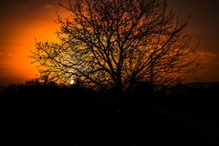 Sunset reflecting the beautiful landscape of the tree royalty free stock photography