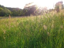 Nature & Sunset. Nature wood green field at sunset Stock Photography