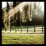 Nature sunshine springtime wooden fence willow tree Royalty Free Stock Photos