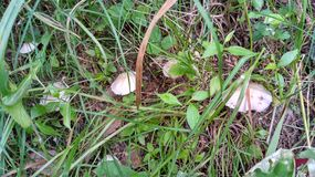Forest mushroom first season 2019 stock photos