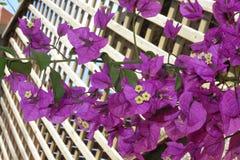 Nature sur le trellis Photo stock