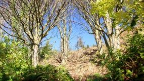 Nature sur une colline raide Photos stock