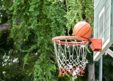 Nature surrounding basketball hoop Stock Photography