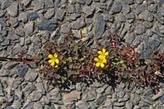 Nature survivant Image libre de droits