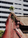 Tree survives on top of house. Adamant tree growing roots on top of old house, Kuala lumpur, Malaysia Royalty Free Stock Image