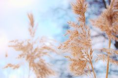 Nature in swedish lake Royalty Free Stock Photos