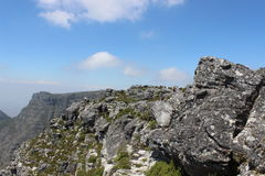 Nature in Table Mountain National Park, Cape Town South Africa Stock Photos