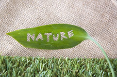 Nature tag. Made from green leaf Royalty Free Stock Photography