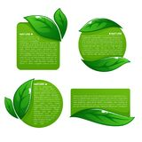 Nature tag templates, vector collection of leaf labels, stickers. 
