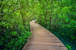 Nature tail. At Klong Song Nam,Krabi Thailand Royalty Free Stock Image