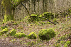 Nature Takes Back. Royalty Free Stock Images